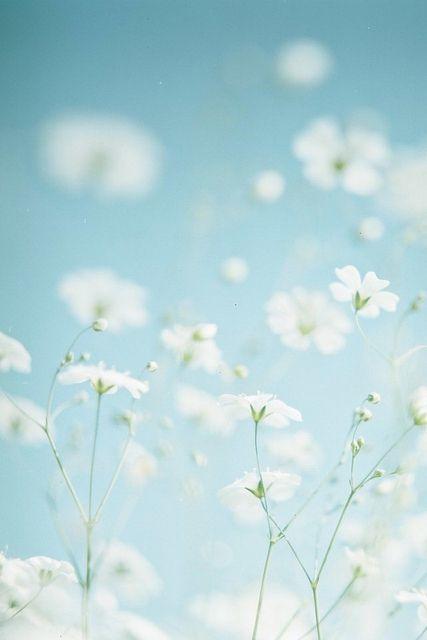 Flowers15
