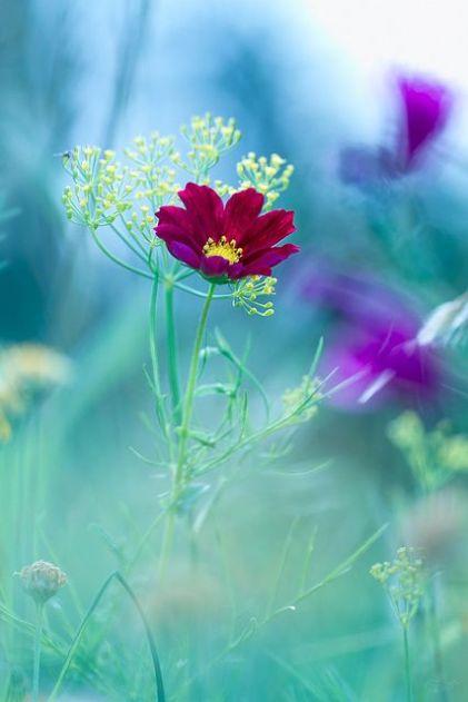 flowers43