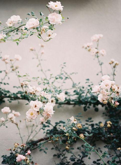 flowers77