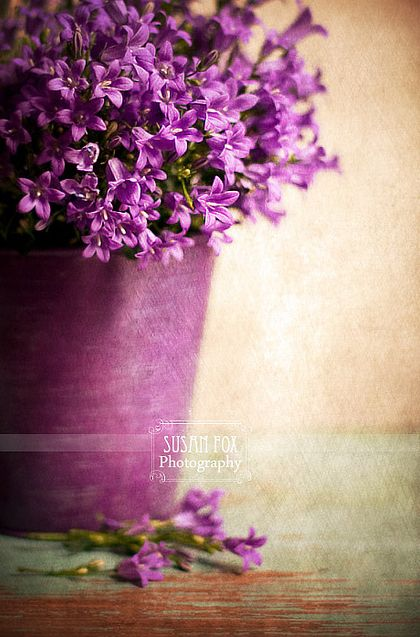 flowers8